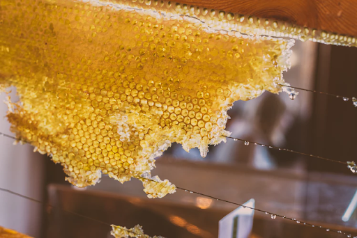 A series of honeycombs are being formed on a wire rack; the combs are shining in the sun.